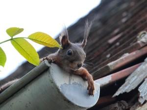 squirrel-451009_640